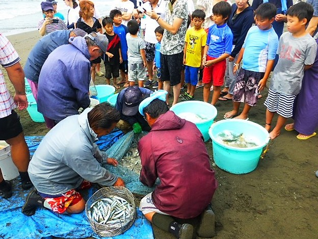 魚の仕分け作業