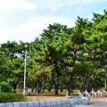 写真: 浜寺公園