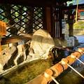 Photos: うさぎの手水舎