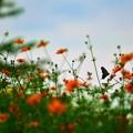 写真: 花の香りに魅せられて