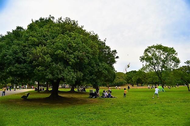 自然文化園の広い芝生