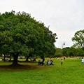 写真: 自然文化園の広い芝生
