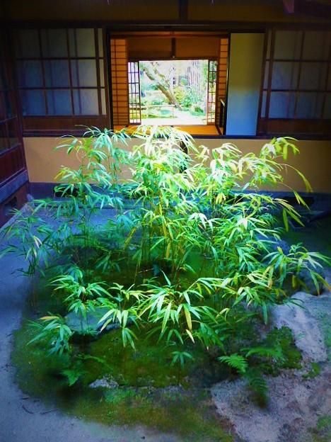 四方竹の坪庭