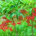 庭に咲いてる万両