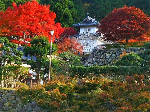 出石城跡と紅葉