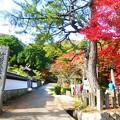 写真: 竹田城跡登山道