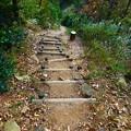 表米神社登山道