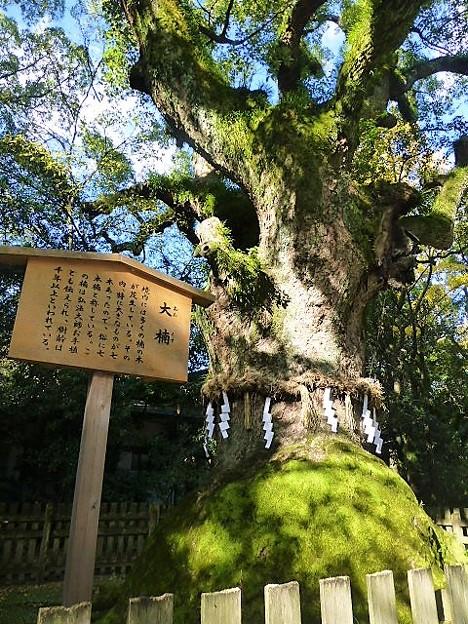 弘法大師によって植えられたと伝わる大楠