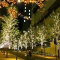 写真: シンフォニー・センチュリー豊田ビル前のイルミネーション