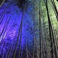 写真: 竹林ライトアップ
