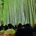 写真: 竹林の小径