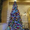写真: 街中のクリスマスツリー