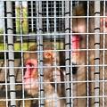 Photos: 日吉の神猿さん