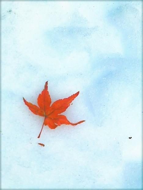 雪と散り紅葉