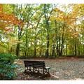写真: 森の中のベンチ