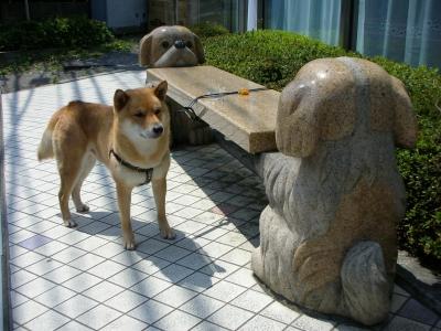 写真: 柴犬じゃないね?