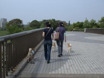 二つの公園を結ぶ橋