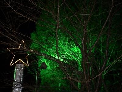 立ち木もライトアップ