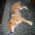 写真: 満足して寝ちゃった・・・