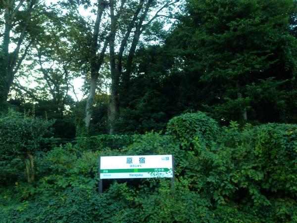 原宿駅の向こう側はテング熱騒動で閉鎖中の代々木公園