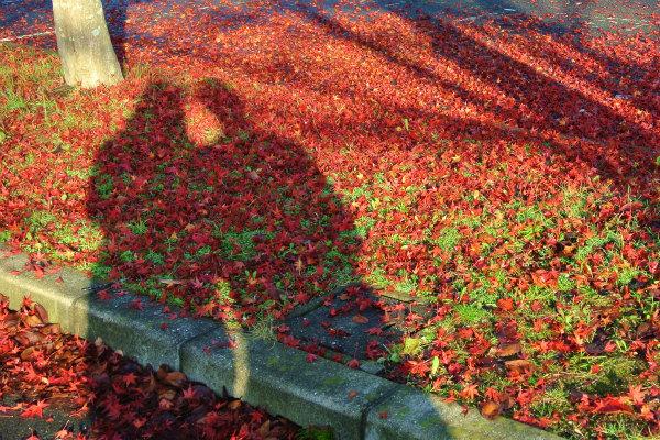 紅葉の絨毯での、家内と私のツーショット写真