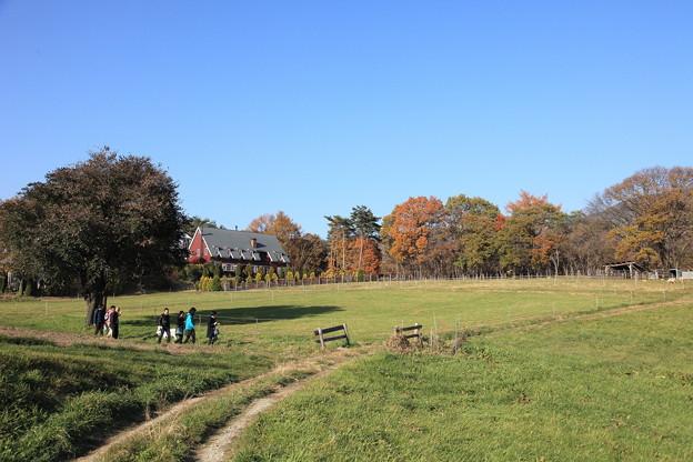 清里の牧場