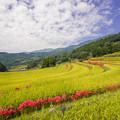 写真: 佐賀県小城市江里山の棚田♪