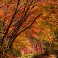 写真: 環境芸術の森♪2