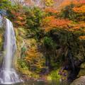 写真: 遊水自然の森カッパ滝♪
