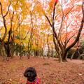 興山園の紅葉♪