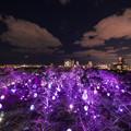 写真: 福岡城 チームラボ 城跡の光の祭♪