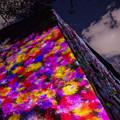 写真: 福岡城 チームラボ 城跡の光の祭♪2