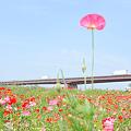 <荒川左岸*梅雨の晴れ間(3)>