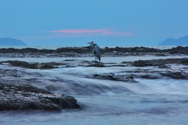 写真: 日暮れ時に佇む鷺