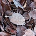 写真: 落葉の薄化粧