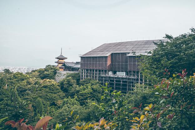 写真: 清水寺