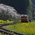 写真: 小湊鉄道の桜 2010 10