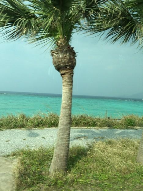 写真: 沖縄の海