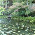 写真: なもないいけ(モネの池)2^0^♪