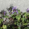 もう春ですよ~^0^∥