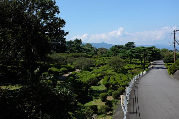 小室山公園のあふれる緑