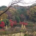 薬師池公園の紅葉(1)