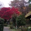 薬師池公園の紅葉(2)