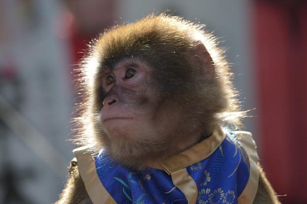 大道芸のお猿さん