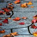 写真: 落紅葉