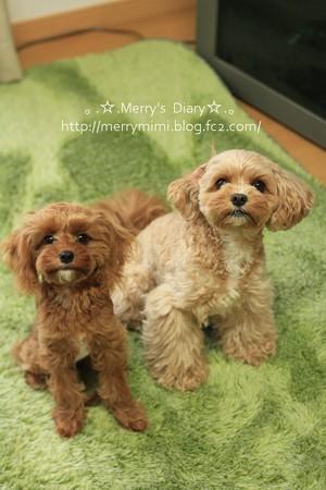 Merry&ViVi