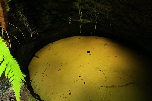 写真: 365 ヒカリモの洞穴 日立市