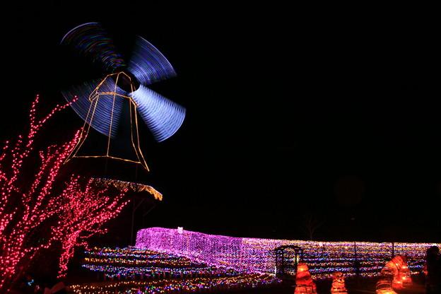 写真: 水郷桜イルミネーション 土浦市
