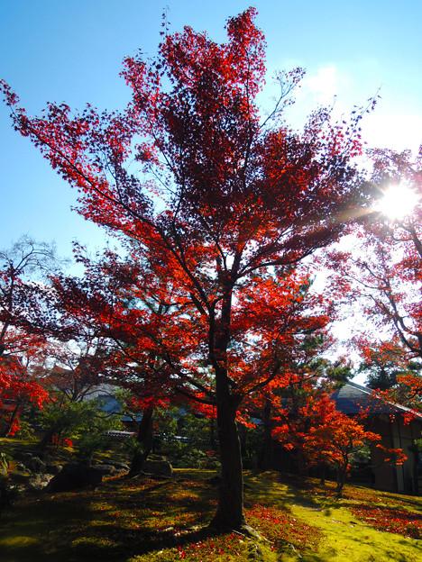 京都楓葉02
