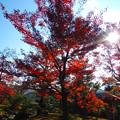 写真: 京都楓葉02